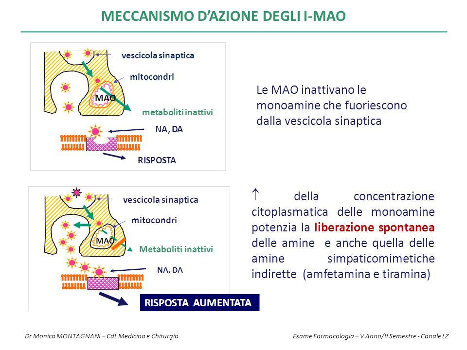 MECCANISMO D'AZIONE DEGLI I-MAO Le MAO inattivano le monoamine che fuoriescono dalla vescicola sinaptica  della concentrazione citoplasmatica delle monoamine potenzia la liberazione spontanea delle amine e anche quella delle amine simpaticomimetiche indirette (amfetamina e tiramina) Dr Monica MONTAGNANI – CdL Medicina e Chirurgia Esame Farmacologia – V Anno/II Semestre - Canale LZ