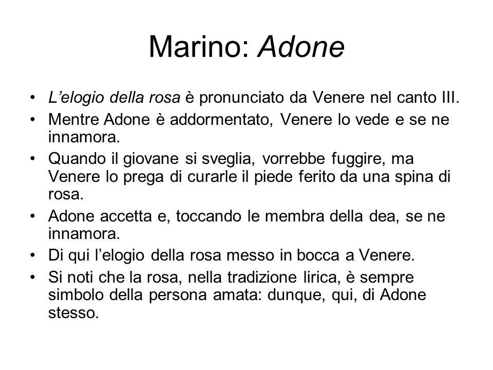 Marino: Adone L'elogio della rosa è pronunciato da Venere nel canto III. Mentre Adone è addormentato, Venere lo vede e se ne innamora. Quando il giova