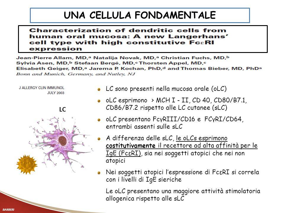 LC LC sono presenti nella mucosa orale (oLC) oLC esprimono > MCH I - II, CD 40, CD80/B7.1, CD86/B7.2 rispetto alle LC cutanee (sLC) oLC presentano Fcγ