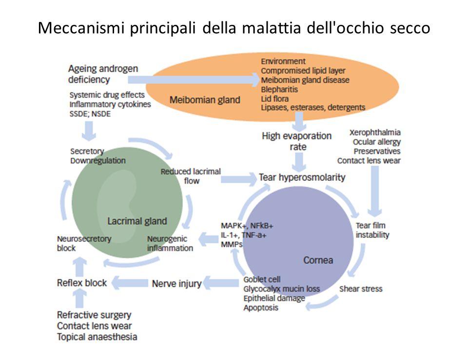 Meccanismi principali della malattia dell'occhio secco