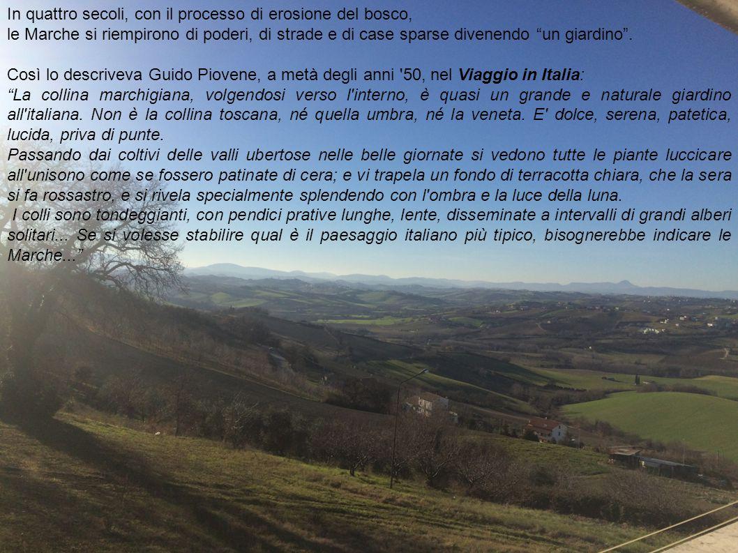 """In quattro secoli, con il processo di erosione del bosco, le Marche si riempirono di poderi, di strade e di case sparse divenendo """"un giardino"""". Così"""