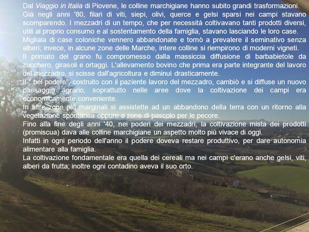 Dal Viaggio in Italia di Piovene, le colline marchigiane hanno subito grandi trasformazioni. Già negli anni '80, filari di viti, siepi, olivi, querce