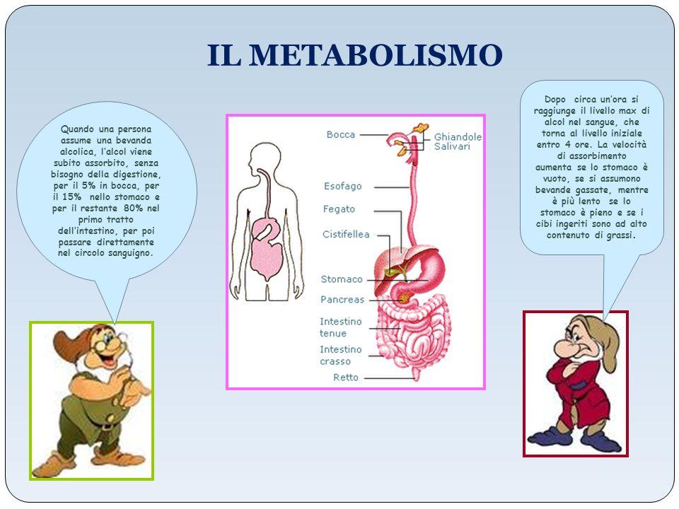 Trasportato nel sangue, l'alcol raggiunge tutti gli organi del corpo, in tempi diversi: dopo 10-15 minuti arriva al fegato, al cervello, al cuore, ai reni, dopo circa mezz'ora ai muscoli e al tessuto adiposo, dove tende a concentrarsi (è liposolubile).