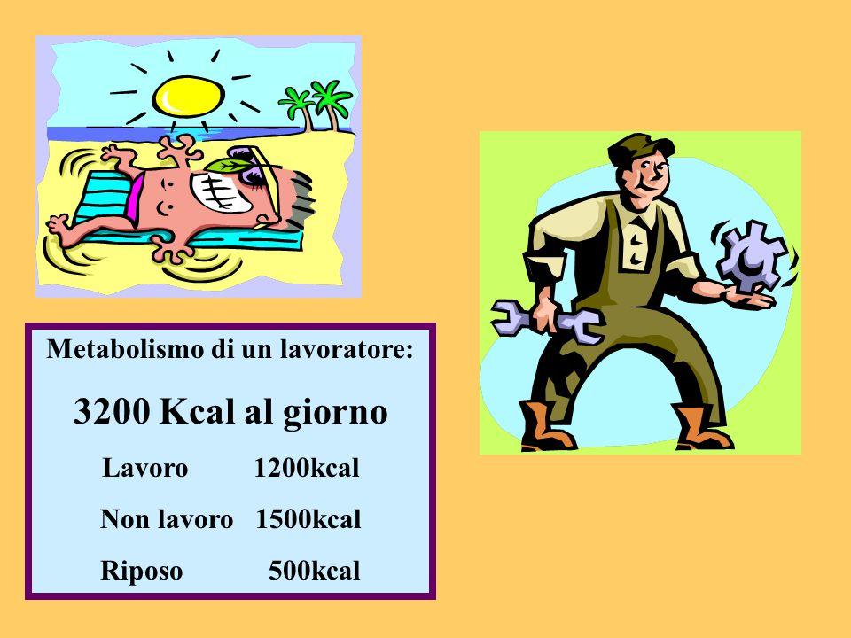 Metabolismo di un lavoratore: 3200 Kcal al giorno Lavoro 1200kcal Non lavoro 1500kcal Riposo 500kcal