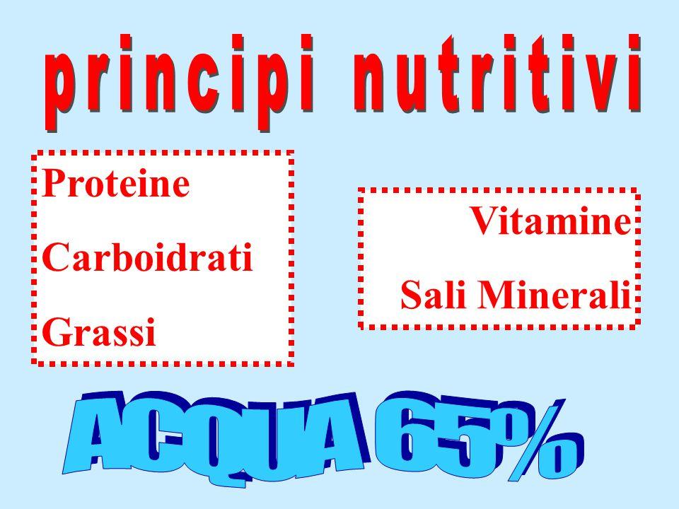 Vitamine Sali Minerali Proteine Carboidrati Grassi