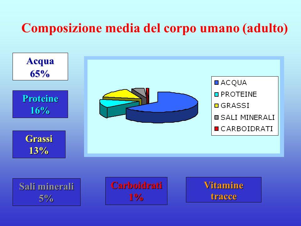 Carboidrati 1% Grassi 13% Proteine 16% Vitaminetracce Sali minerali 5% Acqua65% Composizione media del corpo umano (adulto)