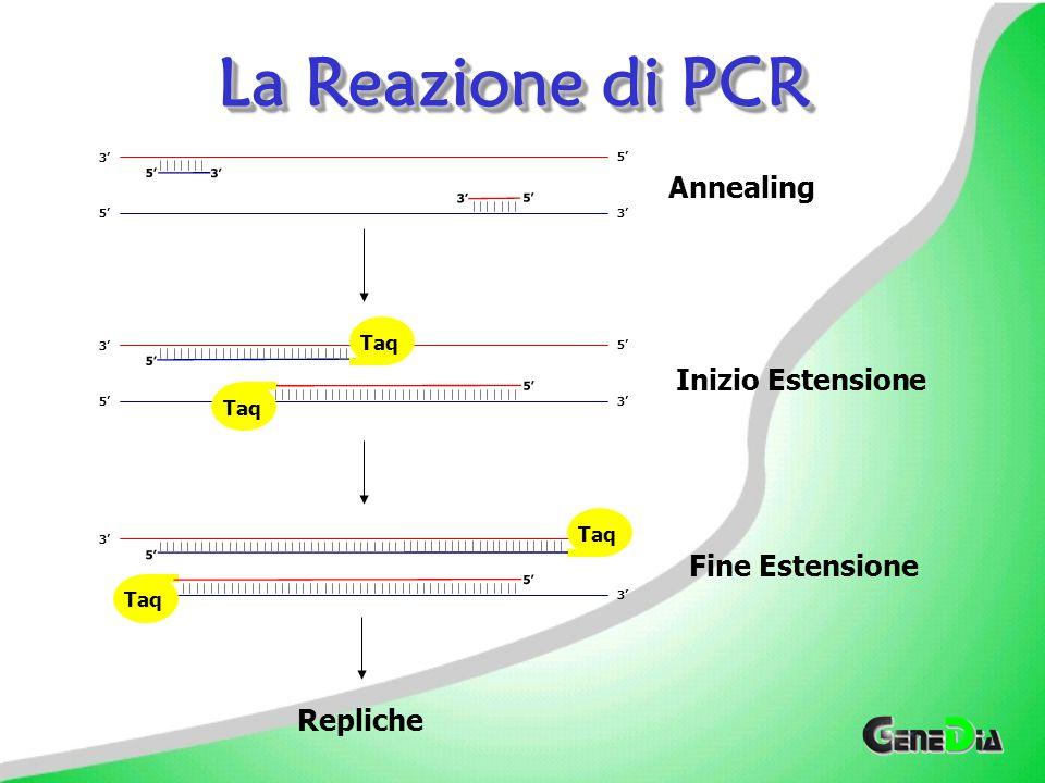 La Reazione di PCR 5' 3' d. NTPs DNA TAQ Polymerase Primers 5' 3' 5'3' 5' 3' 5' 3' 5' 3' 5' 3' 5' 3' 5' 3' Aggiungere Master Mix e Campione Denaturazi