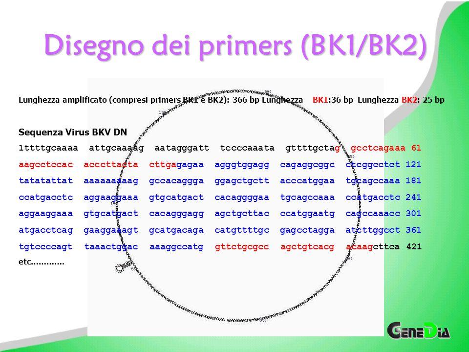 Set-up utilizzato per la determinazione quantitativa di BKV 1 ciclo20°C 10 min94°C 6 min 2 cicli94°C 1 min55°C 1 min72°C 1 min 40 cicli94°C 30 sec55°C