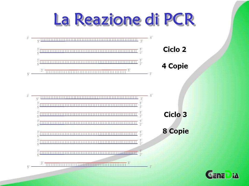 5'3' 5' 3' 5' 3' 5' 3' 5' 3' 5'3' 5' 3' Ciclo 2 4 Copie Ciclo 3 8 Copie 5' 3' 5' 3' 5'3' 5' 3' 5'3' 5' 3' 5'3' 5' 3' 5'3' 5' 3' 5' 3' 5' 3' 5' 3' 5'3' 5' 3' La Reazione di PCR