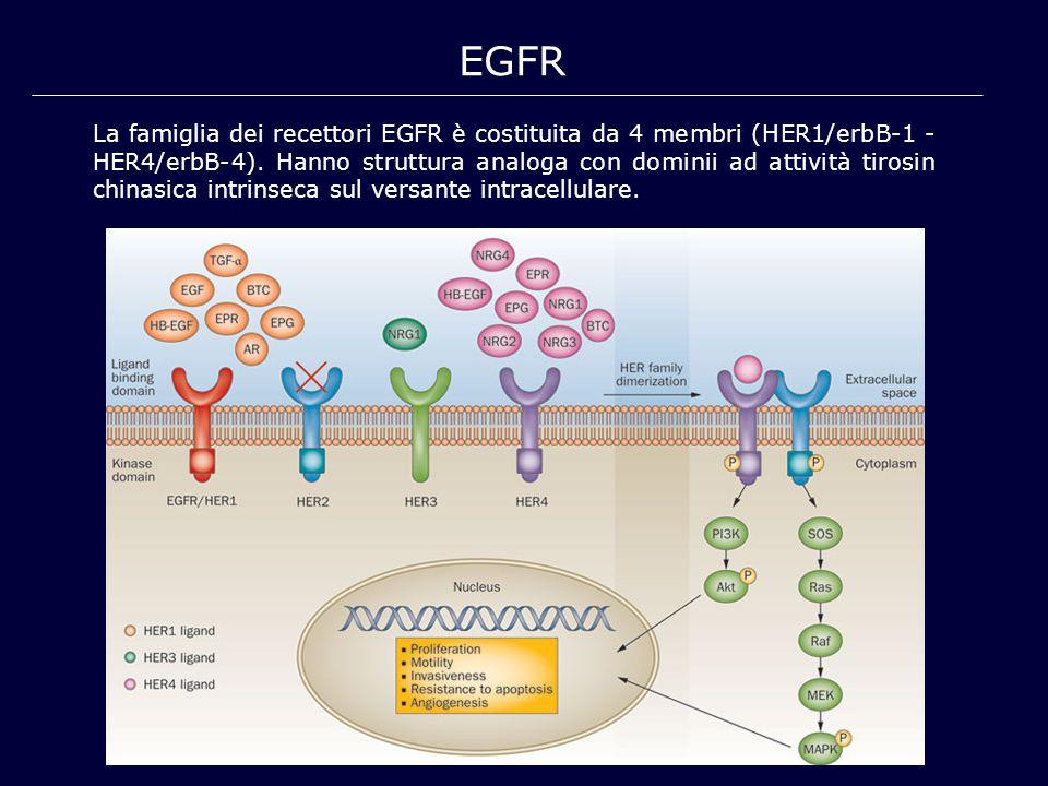 EGFR La famiglia dei recettori EGFR è costituita da 4 membri (HER1/erbB-1 - HER4/erbB-4). Hanno struttura analoga con dominii ad attività tirosin chin
