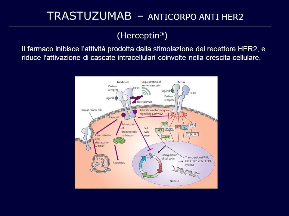 TRASTUZUMAB – ANTICORPO ANTI HER2 Il farmaco inibisce l'attività prodotta dalla stimolazione del recettore HER2, e riduce l'attivazione di cascate int