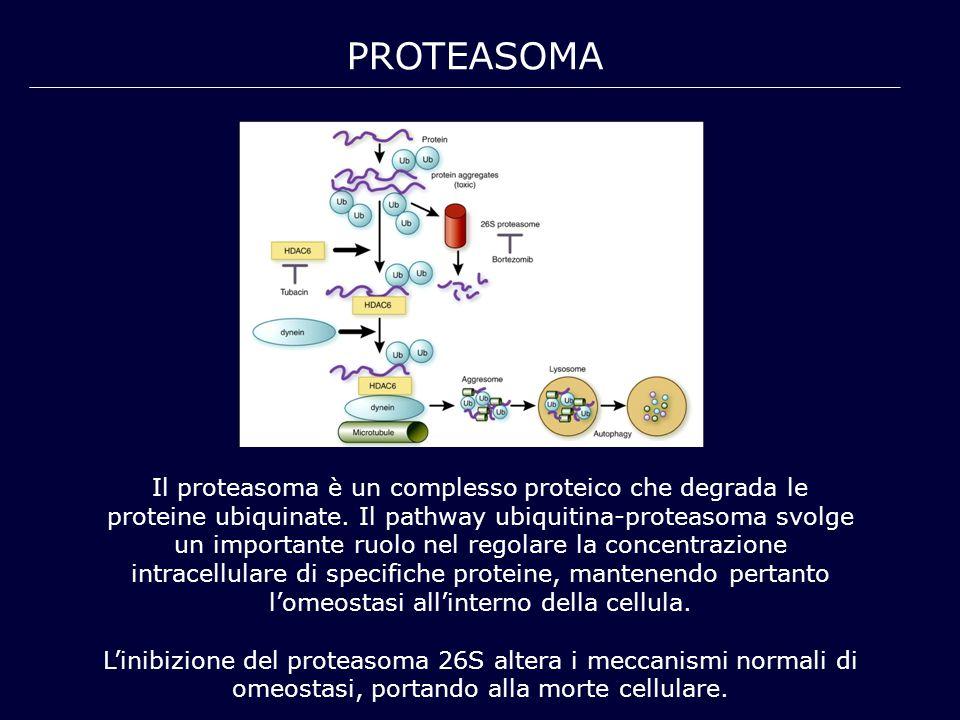PROTEASOMA Il proteasoma è un complesso proteico che degrada le proteine ubiquinate. Il pathway ubiquitina-proteasoma svolge un importante ruolo nel r