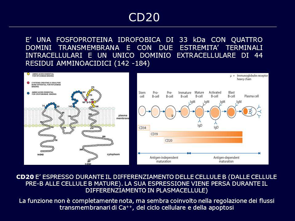 CD20 E' UNA FOSFOPROTEINA IDROFOBICA DI 33 kDa CON QUATTRO DOMINI TRANSMEMBRANA E CON DUE ESTREMITA' TERMINALI INTRACELLULARI E UN UNICO DOMINIO EXTRA