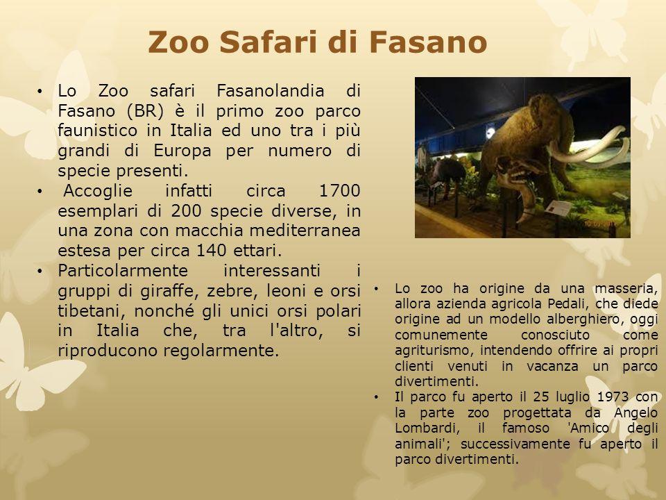 Lo Zoo safari Fasanolandia di Fasano (BR) è il primo zoo parco faunistico in Italia ed uno tra i più grandi di Europa per numero di specie presenti. A