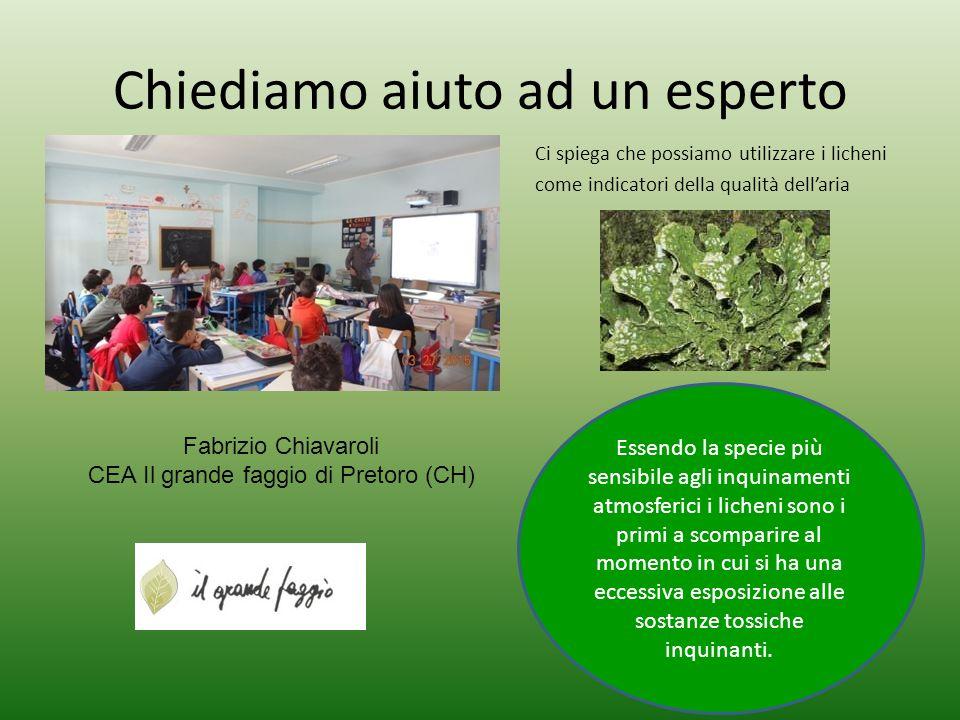 Chiediamo aiuto ad un esperto Fabrizio Chiavaroli CEA Il grande faggio di Pretoro (CH) Ci spiega che possiamo utilizzare i licheni come indicatori del