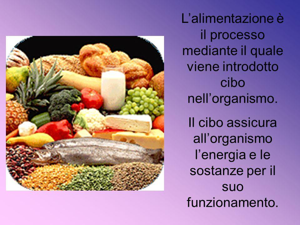 L'alimentazione è il processo mediante il quale viene introdotto cibo nell'organismo. Il cibo assicura all'organismo l'energia e le sostanze per il su