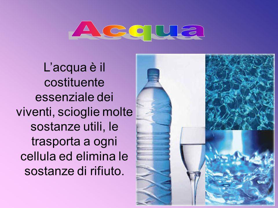 L'acqua è il costituente essenziale dei viventi, scioglie molte sostanze utili, le trasporta a ogni cellula ed elimina le sostanze di rifiuto.