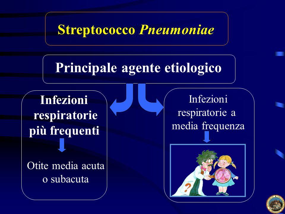 Streptococco Pneumoniae Principale agente etiologico Infezioni respiratorie più frequenti Infezioni respiratorie a media frequenza Otite media acuta o subacuta