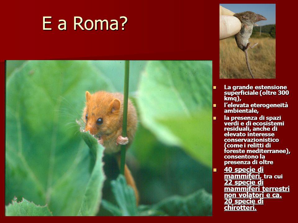 E a Roma? La grande estensione superficiale (oltre 300 kmq), La grande estensione superficiale (oltre 300 kmq), l'elevata eterogeneità ambientale, l'e