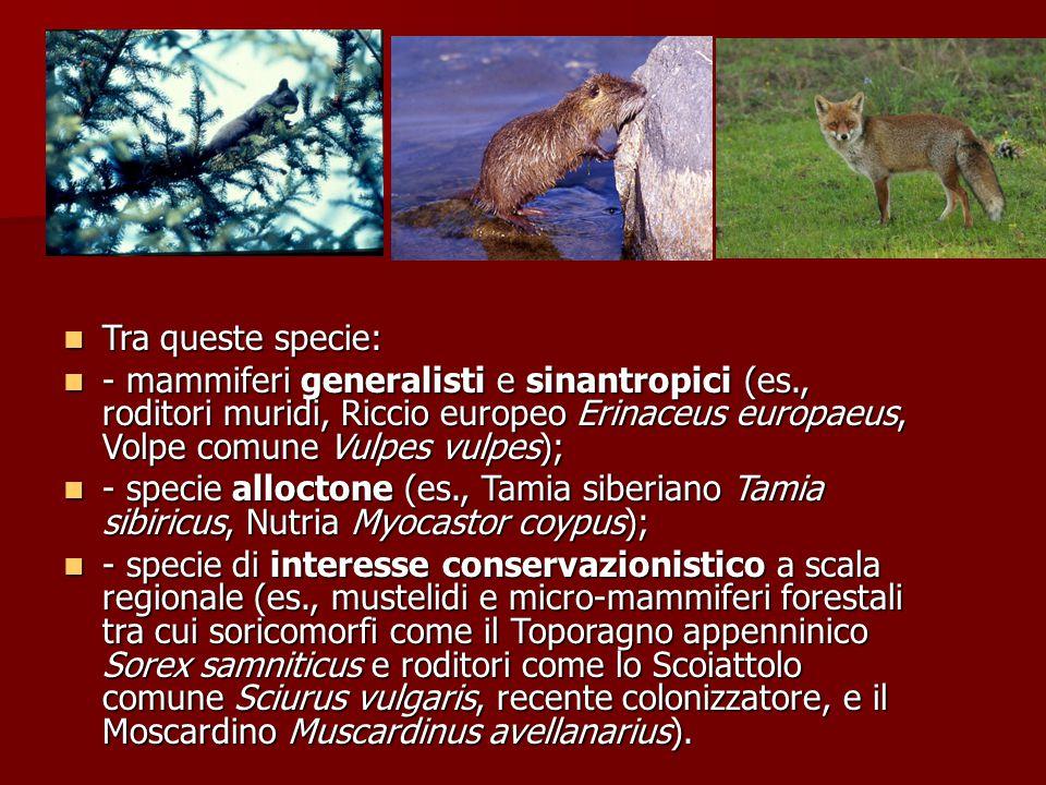 Tra queste specie: Tra queste specie: - mammiferi generalisti e sinantropici (es., roditori muridi, Riccio europeo Erinaceus europaeus, Volpe comune V