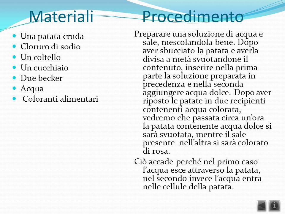 Materiali Procedimento Una patata cruda Cloruro di sodio Un coltello Un cucchiaio Due becker Acqua Coloranti alimentari Preparare una soluzione di acq