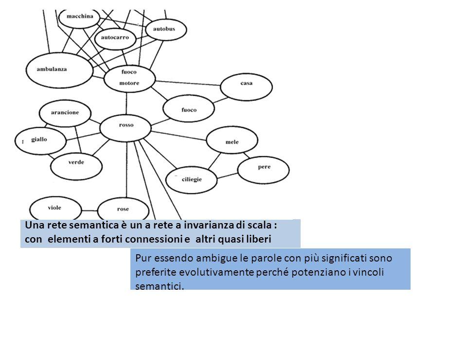 Una rete semantica è un a rete a invarianza di scala : con elementi a forti connessioni e altri quasi liberi Pur essendo ambigue le parole con più significati sono preferite evolutivamente perché potenziano i vincoli semantici.