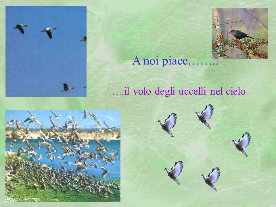 …..il volo degli uccelli nel cielo Palermo: la kalsa A noi piace……..