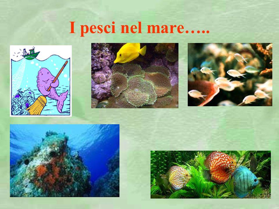 I pesci nel mare…..