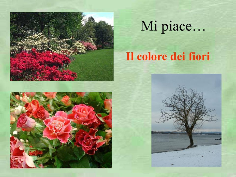 Mi piace… Il colore dei fiori