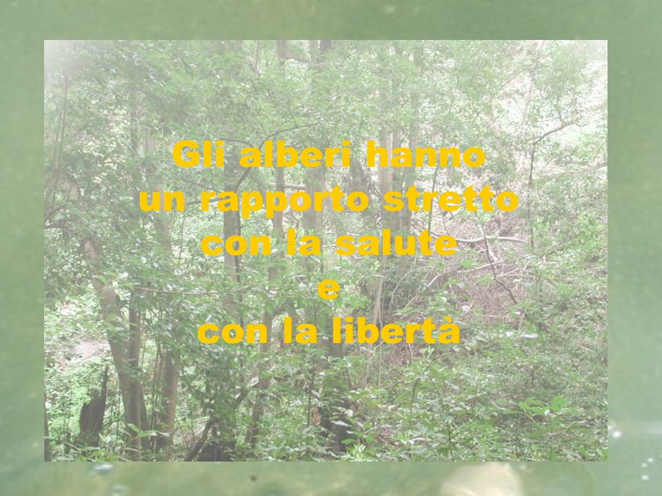 Gli alberi hanno un rapporto stretto con la salute e con la libertà