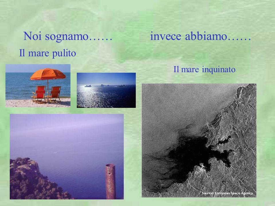 Noi sognamo…… invece abbiamo…… Il mare pulito Il mare inquinato