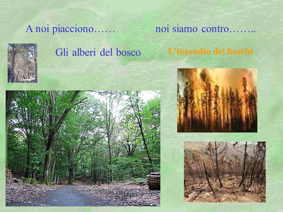 Gli alberi del bosco L'incendio dei boschi A noi piacciono…… noi siamo contro……..