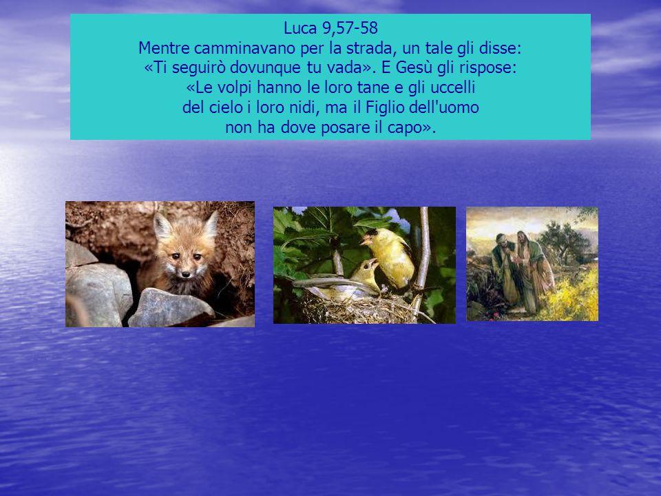 Luca 9,57-58 Mentre camminavano per la strada, un tale gli disse: «Ti seguirò dovunque tu vada». E Gesù gli rispose: «Le volpi hanno le loro tane e gl