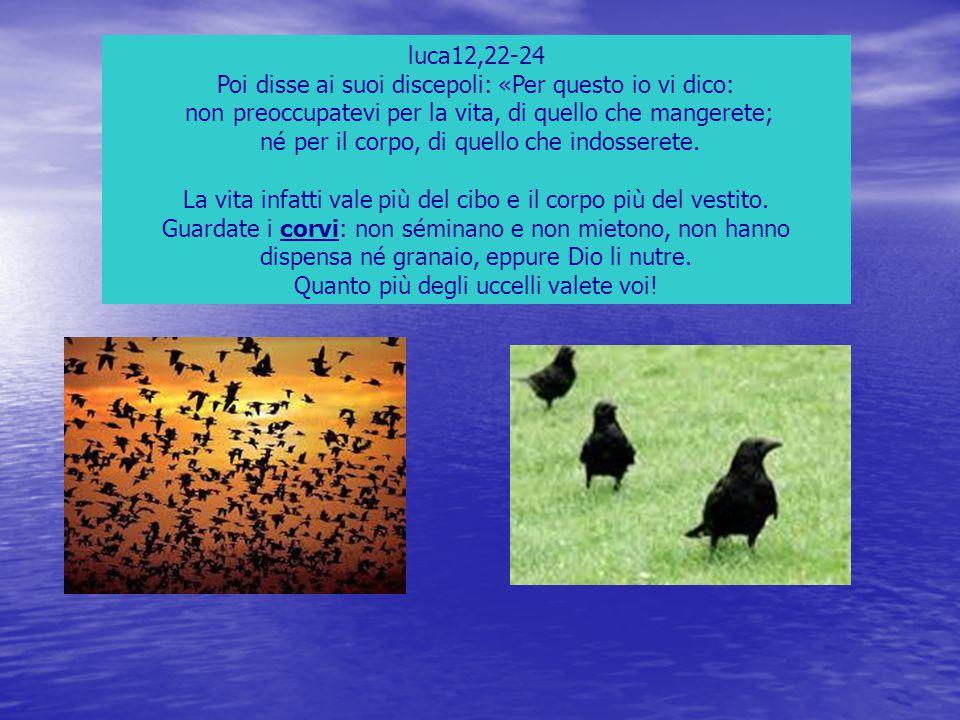 luca12,22-24 Poi disse ai suoi discepoli: «Per questo io vi dico: non preoccupatevi per la vita, di quello che mangerete; né per il corpo, di quello c