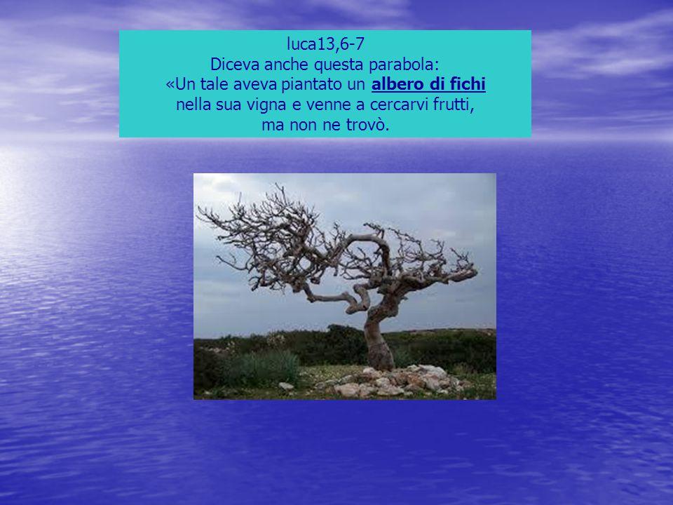 luca13,6-7 Diceva anche questa parabola: «Un tale aveva piantato un albero di fichi nella sua vigna e venne a cercarvi frutti, ma non ne trovò.