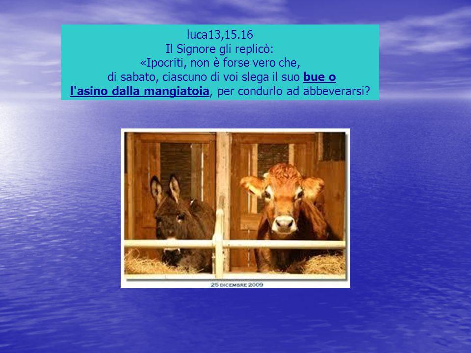 luca13,15.16 Il Signore gli replicò: «Ipocriti, non è forse vero che, di sabato, ciascuno di voi slega il suo bue o l'asino dalla mangiatoia, per cond