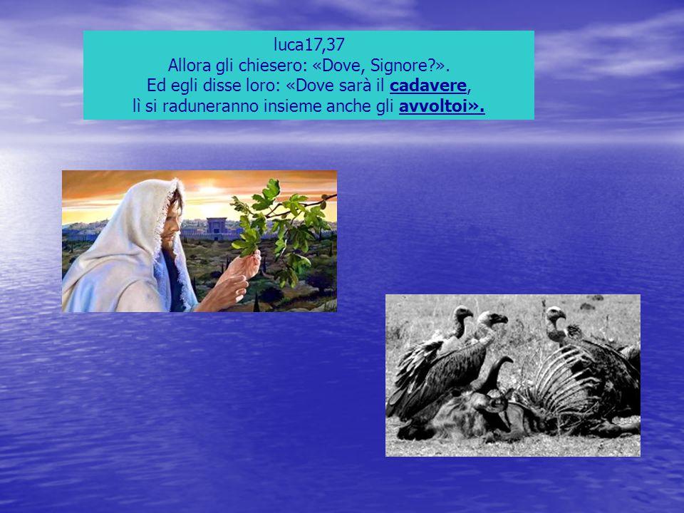 luca17,37 Allora gli chiesero: «Dove, Signore?». Ed egli disse loro: «Dove sarà il cadavere, lì si raduneranno insieme anche gli avvoltoi».