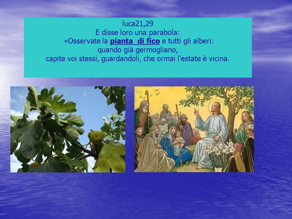 luca21,29 E disse loro una parabola: «Osservate la pianta di fico e tutti gli alberi: quando già germogliano, capite voi stessi, guardandoli, che orma