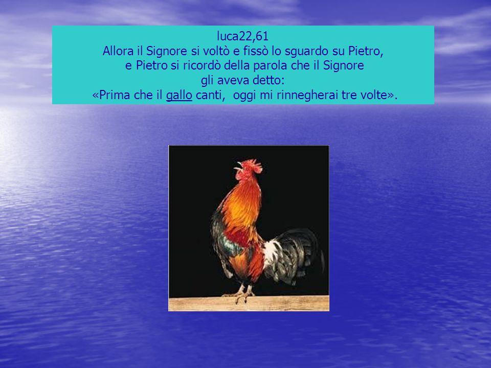 luca22,61 Allora il Signore si voltò e fissò lo sguardo su Pietro, e Pietro si ricordò della parola che il Signore gli aveva detto: «Prima che il gall
