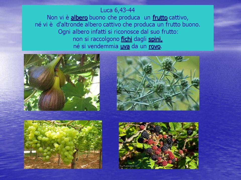 Luca 6,43-44 alberofrutto Non vi è albero buono che produca un frutto cattivo, né vi è d'altronde albero cattivo che produca un frutto buono. Ogni alb