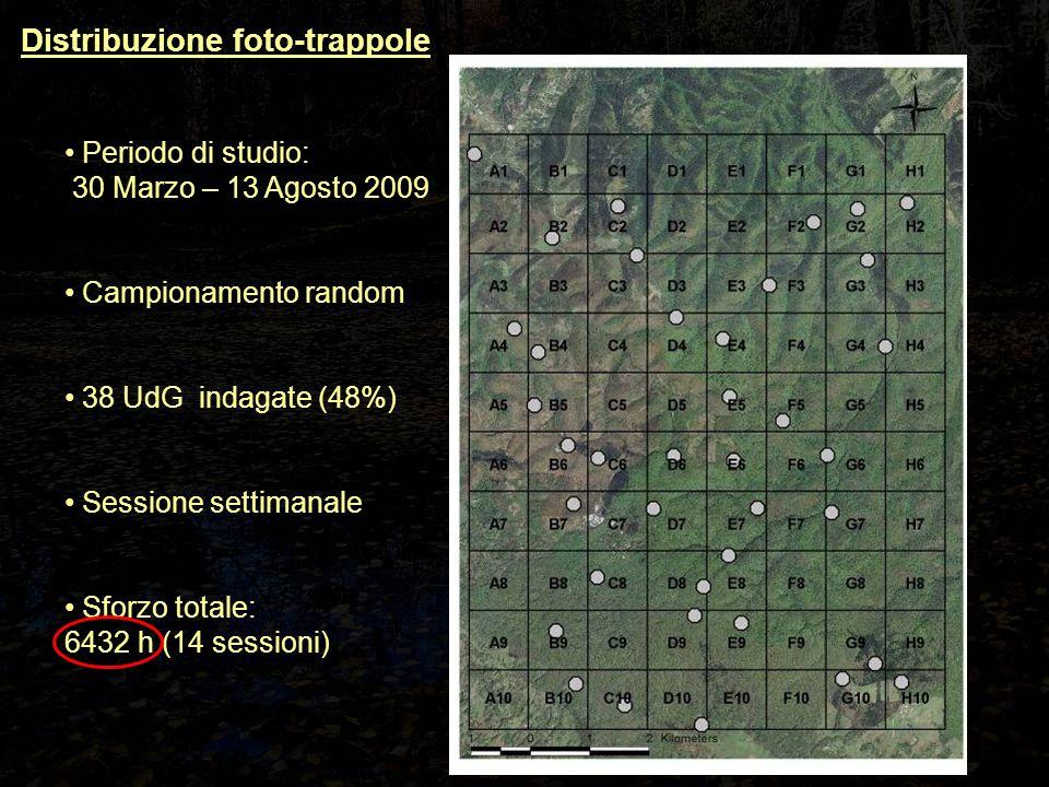 Periodo di studio: 30 Marzo – 13 Agosto 2009 Campionamento random 38 UdG indagate (48%) Sessione settimanale Sforzo totale: 6432 h (14 sessioni) Distribuzione foto-trappole