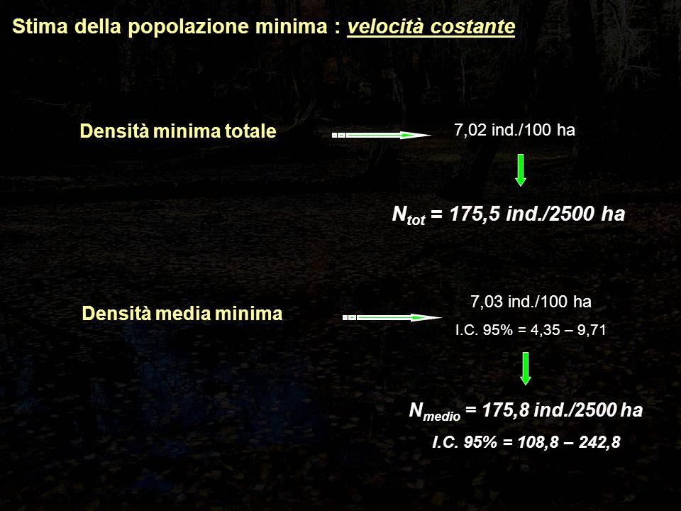 Stima della popolazione minima : velocità costante Densità minima totale Densità media minima 7,02 ind./100 ha 7,03 ind./100 ha I.C.
