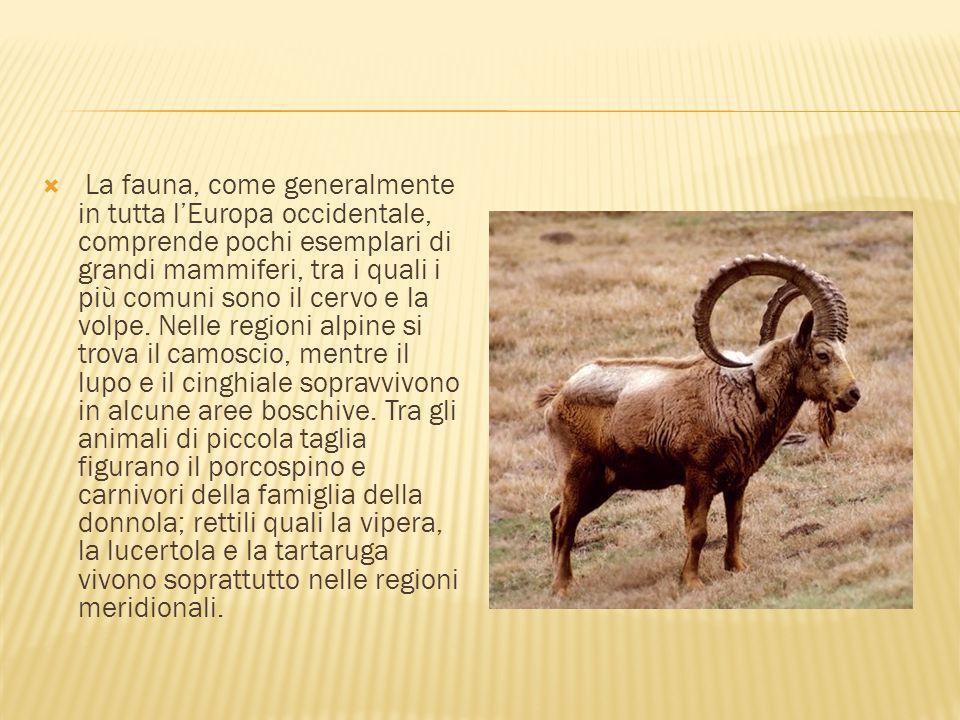  La fauna, come generalmente in tutta l'Europa occidentale, comprende pochi esemplari di grandi mammiferi, tra i quali i più comuni sono il cervo e l