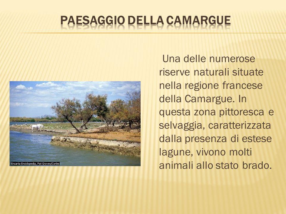 Una delle numerose riserve naturali situate nella regione francese della Camargue. In questa zona pittoresca e selvaggia, caratterizzata dalla presenz
