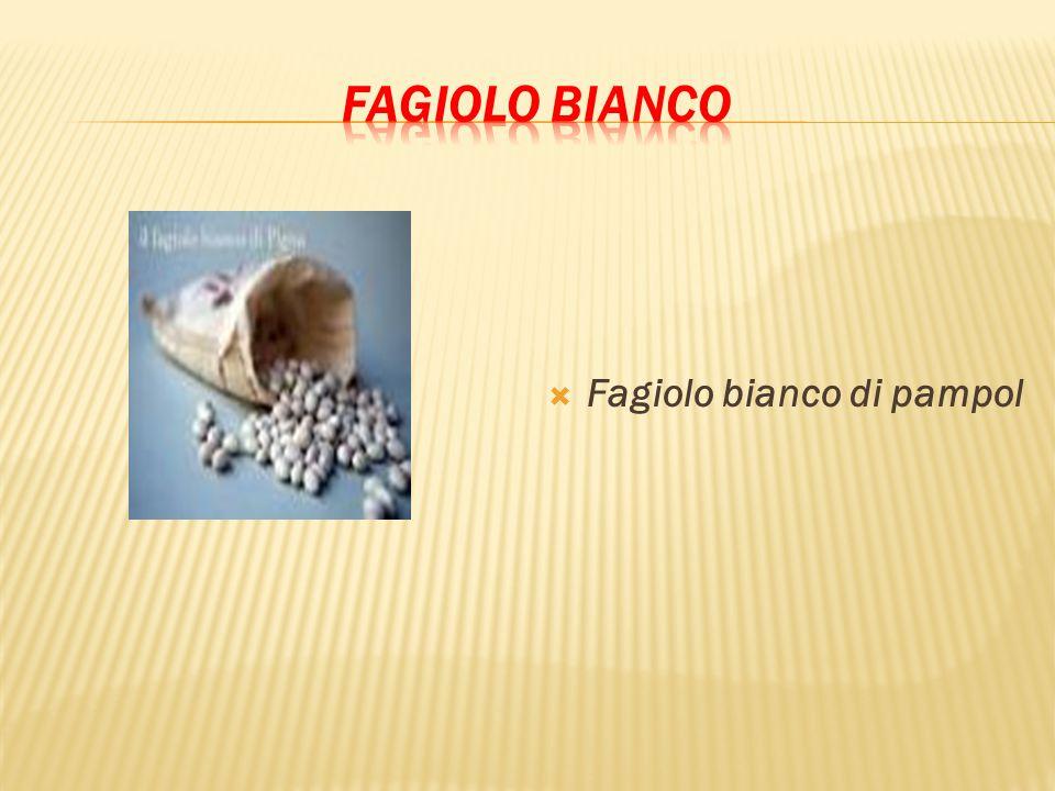  Fagiolo bianco di pampol