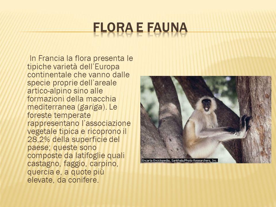 In Francia la flora presenta le tipiche varietà dell'Europa continentale che vanno dalle specie proprie dell'areale artico-alpino sino alle formazioni