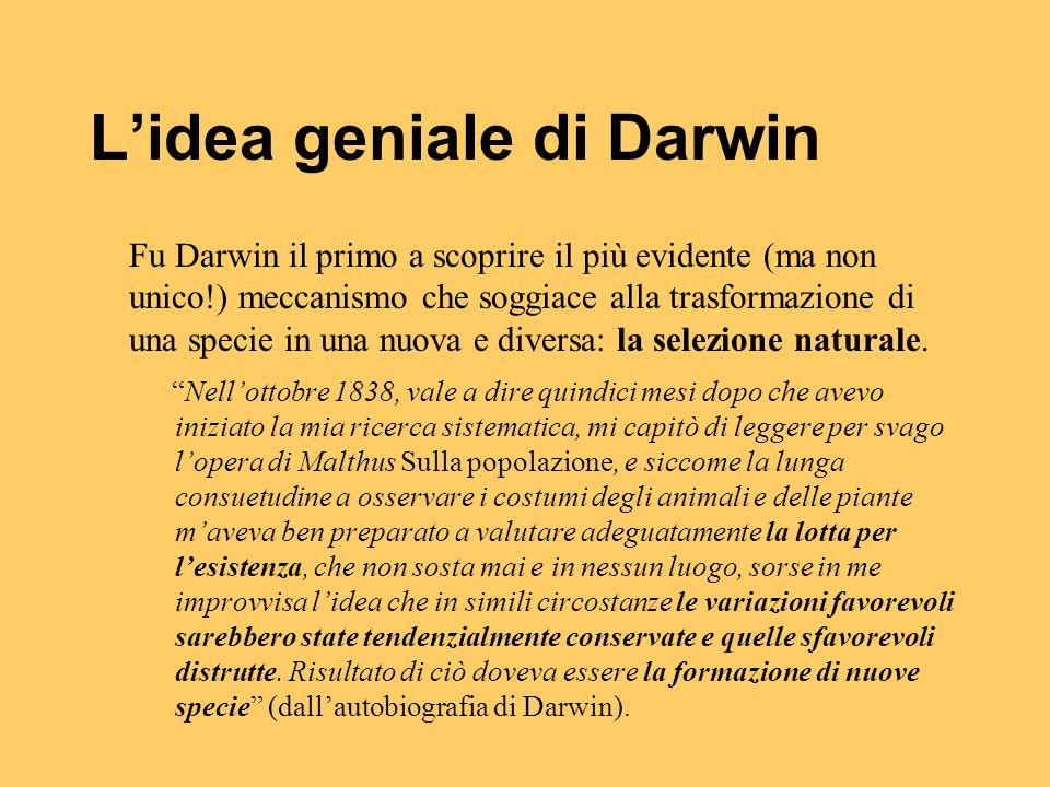 L'idea geniale di Darwin Fu Darwin il primo a scoprire il più evidente (ma non unico!) meccanismo che soggiace alla trasformazione di una specie in un