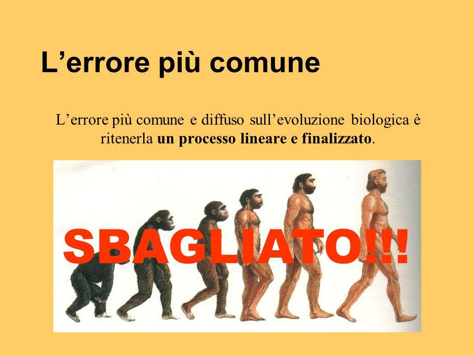 L'errore più comune L'errore più comune e diffuso sull'evoluzione biologica è ritenerla un processo lineare e finalizzato. SBAGLIATO!!!