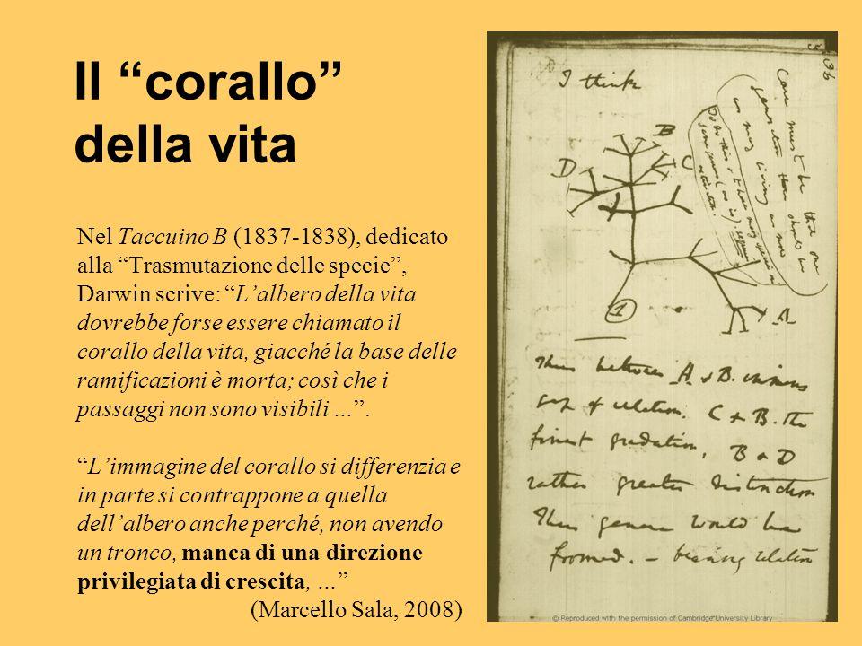 """Nel Taccuino B (1837-1838), dedicato alla """"Trasmutazione delle specie"""", Darwin scrive: """"L'albero della vita dovrebbe forse essere chiamato il corallo"""