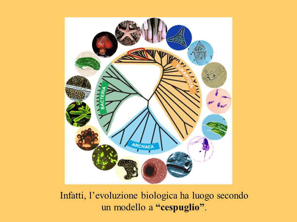 """Infatti, l'evoluzione biologica ha luogo secondo un modello a """"cespuglio""""."""